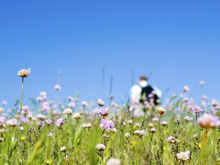Meadow, walking in wildflowers. Stock Photo
