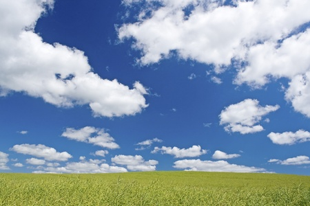 Green field with blue summer sky.