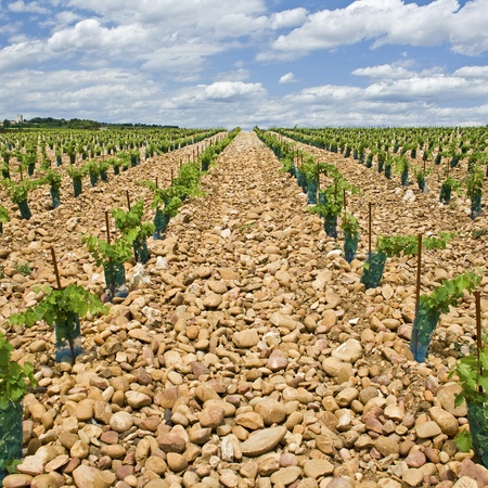 Vineyard from Chateauneuf-du-Pape. Provence. France. Stock Photo