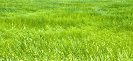 Green field, abstract blurred background.