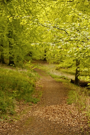 Forest in spring, with footpath. Stock Photo