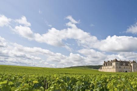 Vineyard in Bourgogne, Burgundy  France  Stock Photo