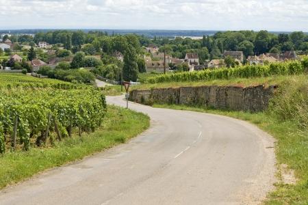 Road in vineyard, Burgundy, Bourgogne  France