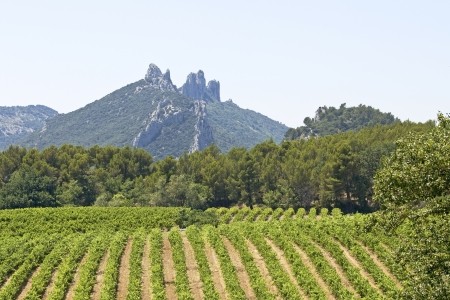 Gigondas, vineyard with Mountain. Provence. France. photo