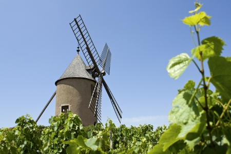 viniculture: Vineyard, Moulin A Vent from Beaujolais  France   Stock Photo