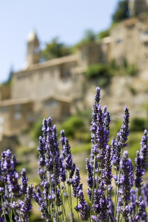 Lavender flower, with French Hilltop Village. Provence. Stock Photo