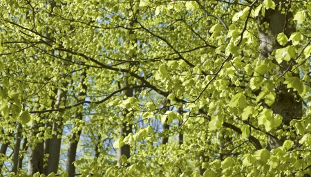 Springtime, leaves in forest, abstract defocused.