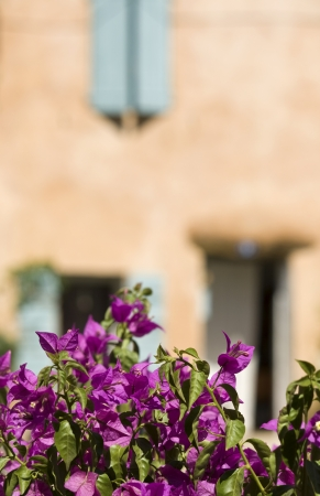 Village french with bougainvillea. Provence. Stock Photo