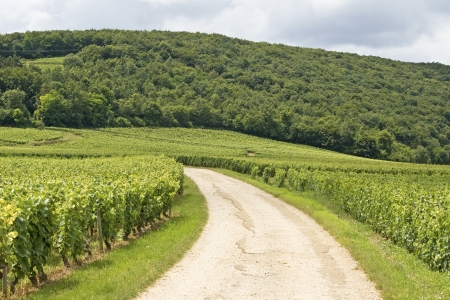 Vineyard in Bourgogne, road in Cote de nuits.