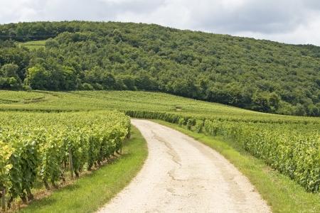 de focus: Vineyard in Bourgogne, road in Cote de nuits.
