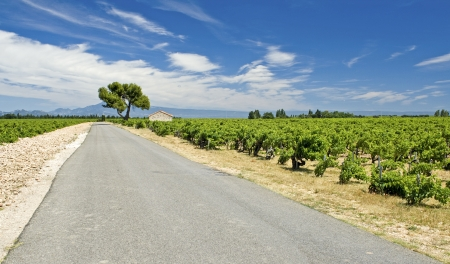 Vineyard, with road from Chataeuneuf de Pape. Provence. France.