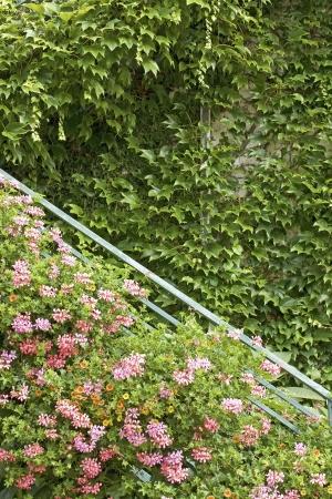 vertical image: Vertical Garden, green wall with flower.