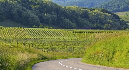 Road, in vineyard from Alsace  France  Stock Photo