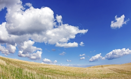 Field, with blue sky in landscape