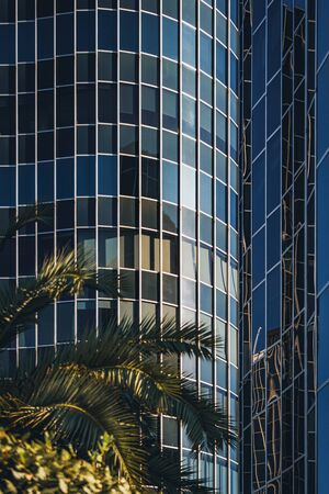 Palm trees growing in front of a curved glass office building 免版税图像