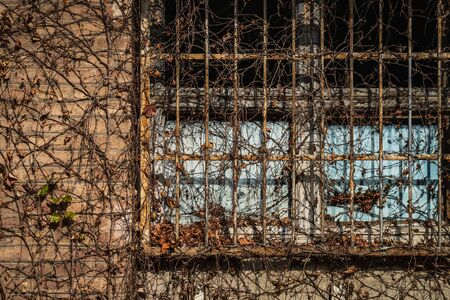 Aged latticed window of an old factory covered by dry ivy branches