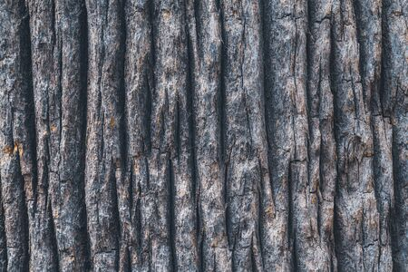 Bark texture of the wide trunk of a California fan palm tree
