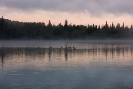 Canadian Geese on Cameron Lake at Sunrise