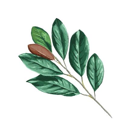 Magnolia Leaf Vector - botanical illustration, vector isolated on a white background