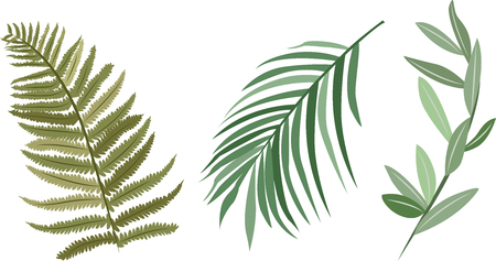 Tropical leaves vector set. Fern leaves, palm leaves and olive leaves - Vector Illustration