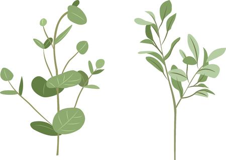 Tropical leaves vector set. Silver dollar eucalyptus and lambs ear leaves - Vector