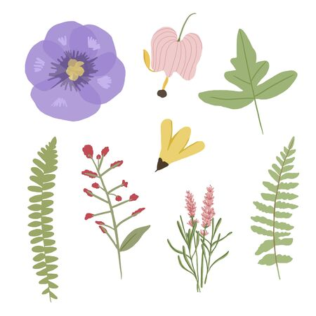 Set of botanical with gouache style - wild flowers and herb - Illustration 新聞圖片