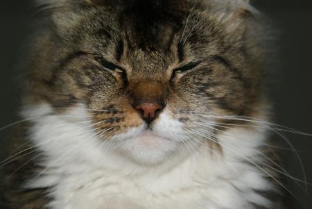 fussy: Fussy Cat
