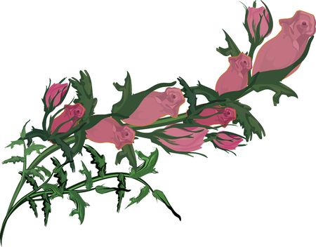 rose: Hand drawn Rose design element, file has no gradients.