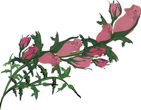 Hand getekende Rose ontwerp element, bestand heeft geen verlopen.  Stockfoto - 2317070