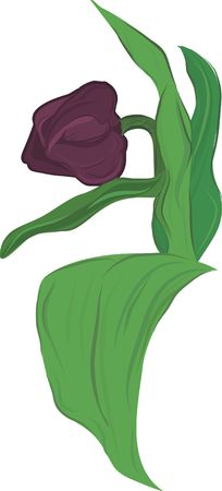 designelement: A stylized drawing of a tulip solitaire. Stock Photo