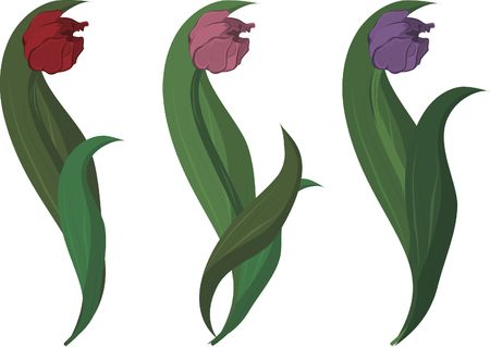 stylized drawing of three tulips.