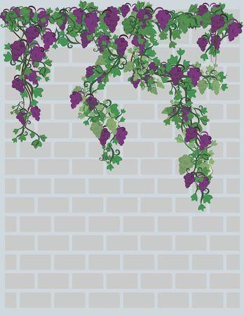 Illustration von Weintrauben und Efeu auf eine Mauer mit Grunge-Textur. Datei enthält keine Steigungen. Standard-Bild - 2330831
