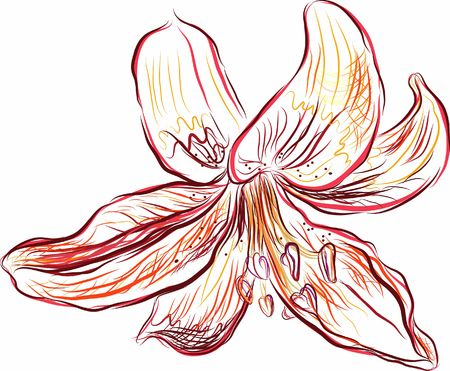 Hand drawn Lily floral still life, file has no gradients.