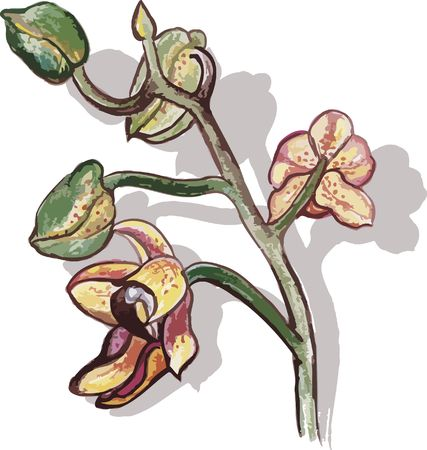 Orchid buds hand drawn still life, with natural brush texture, file has no gradients.  photo