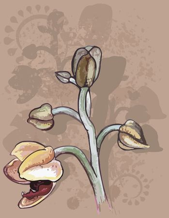 Orchid hand drawn still life, with a grunge background, file has no gradients.  photo