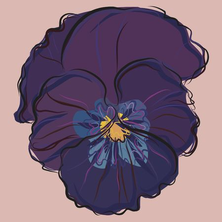 Pansy still life illustration. Stok Fotoğraf