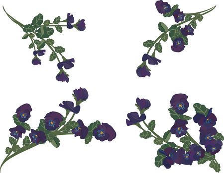 Pansy design elements.