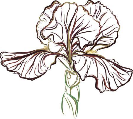 Still life drawing of a purple Iris. Фото со стока - 2365304