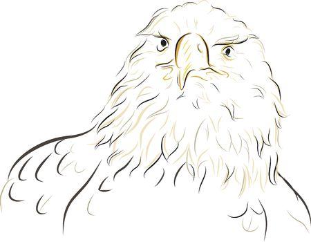 designelement: Hand drawn illustration of a bald eagle, file contains no gradients. Stock Photo