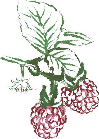 Drawing of vine ripe raspberries. No Gradients.