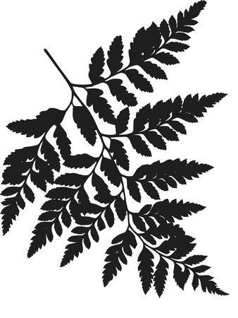 Fern leave illustrated design elements.