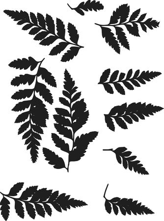 fern fiddlehead: Fern leaves illustrated in a set of design elements. Stock Photo