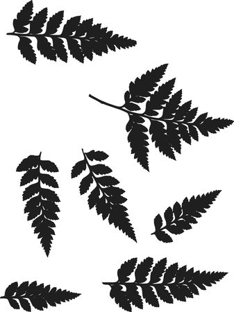 fiddlehead: Fern leaves illustrated in a set of design elements. Stock Photo