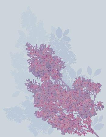 Hand drawn stylized Lilacs. photo