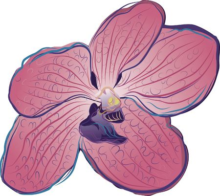 Hand drawn stylized Orchid.