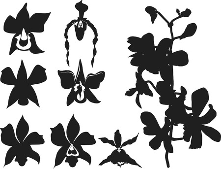 Vector illustration of Orchid design elements  Stock Vector - 3231017