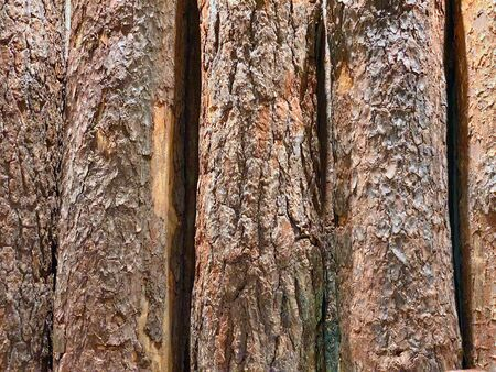 Background of natural wooden vertical old logs with bark Zdjęcie Seryjne