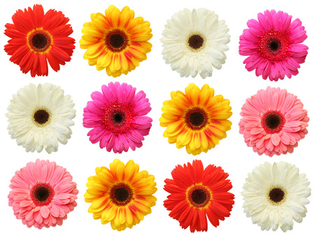 Colorful gerbera on white background isolated Stok Fotoğraf