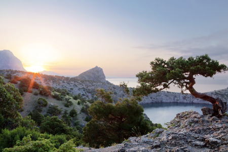 rocky mountain juniper: Pine on a background of sea and mountain in the Crimea Stock Photo