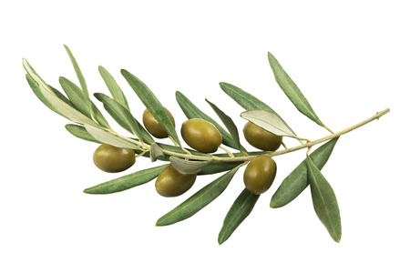 Olive branch with green olives on a white background isolated